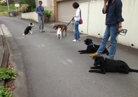 もしも犬の世話ができなくなったら?①